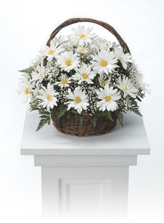 CTT421 Daisy Basket Arrangement